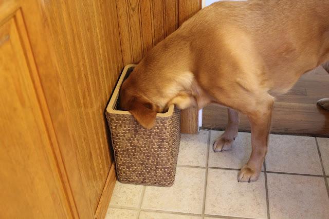 dog sticking head in bathroom waste basket