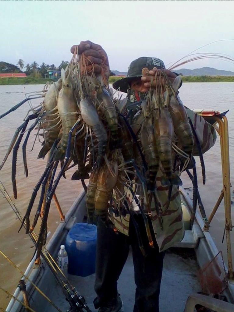 About Us : Freshwater Shrimps Farming, Freshwater Prawn ...Freshwater Shrimp