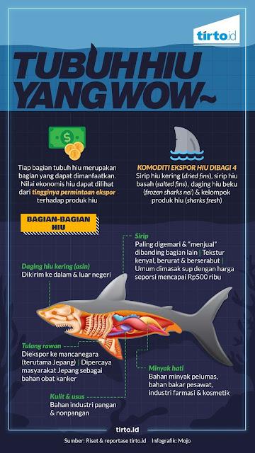 Perdagangan Hiu: Menggiurkan Dan Mengancam Keseimbangan Ekosistem Laut