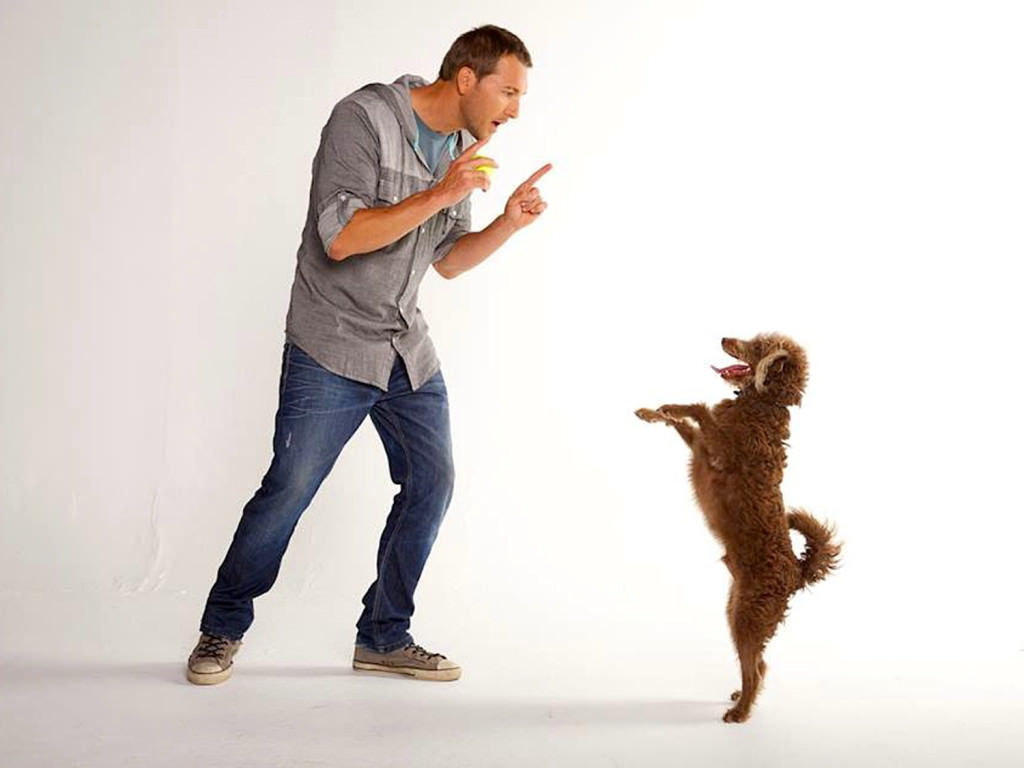 Best Way To Train Dog To Heel