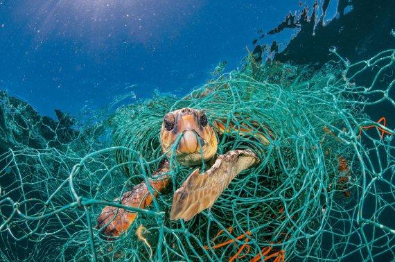 National Geographic шокував знімками тварин, які гинуть від пластику
