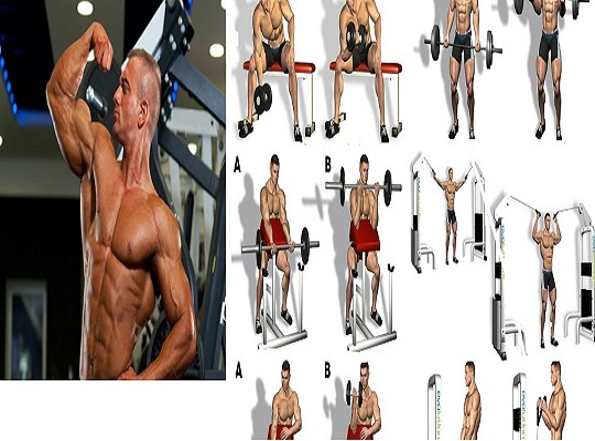 4 Best Week Bicep Muscle Building Program