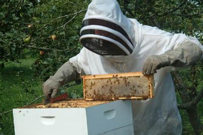 Θεσπρωτία: Ο μελισσοκομικός Σύλλογος Θεσπρωτίας και το πρόβλημα των ψεκασμών