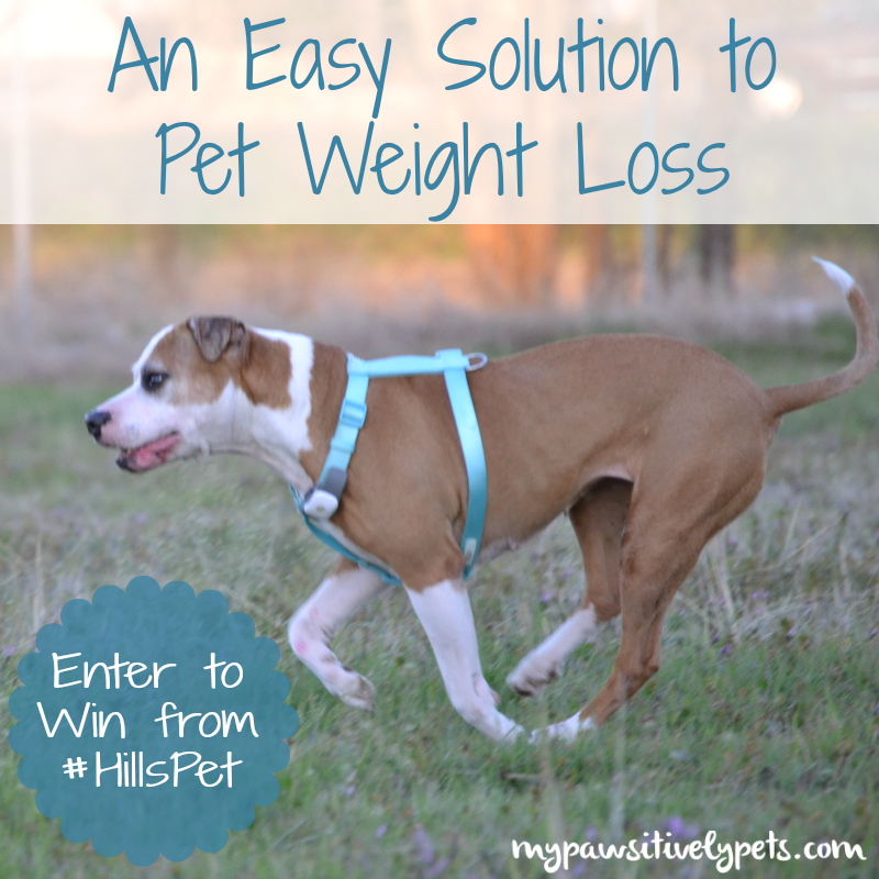Win Hill's Metabolic Weight Loss Solution for Dogs and Cats HillsPet