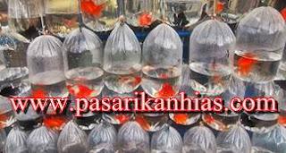 Pasar Ikan Hias Di Muara Bandung