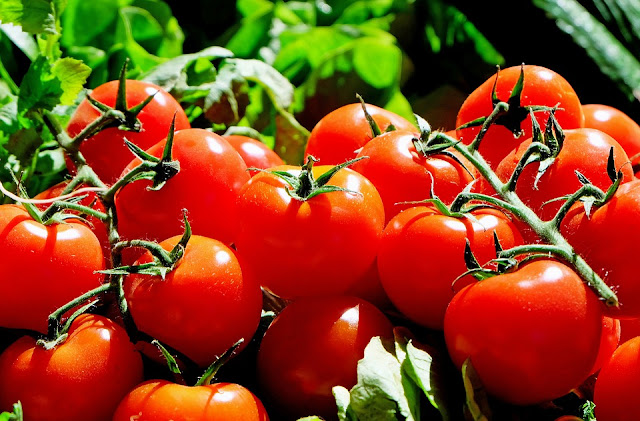 Fruit, healthy foods, nutrition, raw tomatoes, tomato benefits, tomatoes health benefits, tomatoes juice, tomatoes nutrition, tomatoes uses,