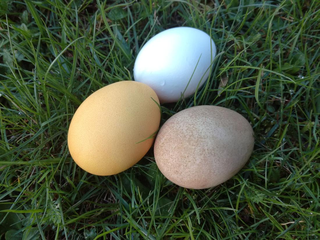 Uova colorate con curcuma