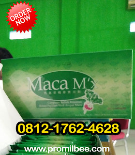 harga maca mx herbal bee