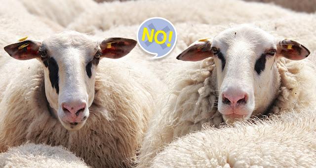 خروف العيد