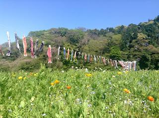 Kurihama Flower Park spring