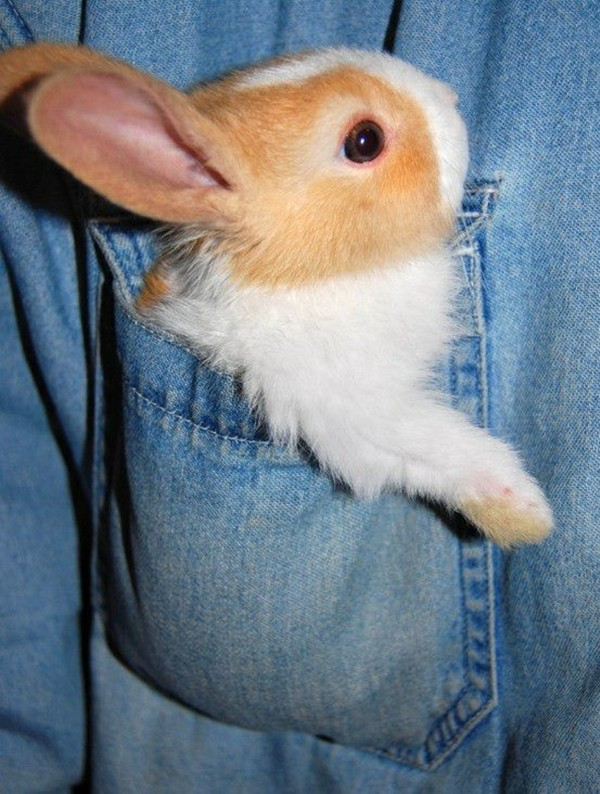 30 Cute Summer Outfits For Teen Girls: Cute Bunny Pictures That Will Make You Say Aww (30 Pics