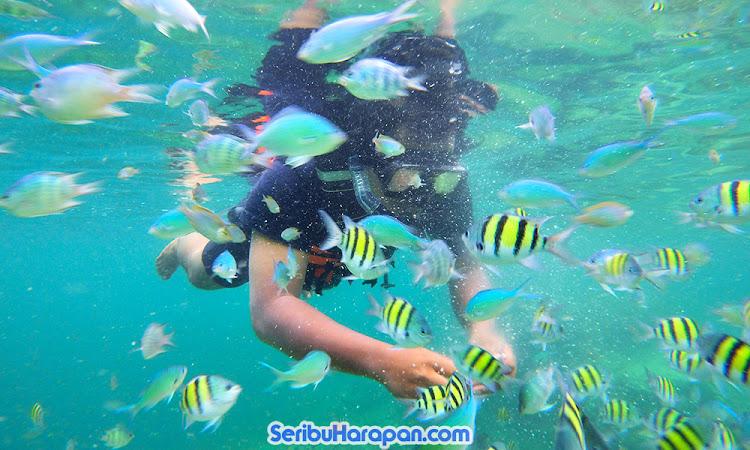 snorkeling atau skin diving