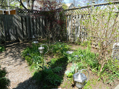 by Paul Jung Gardening Services a Toronto Gardening Company Riverdale Backyard Spring Garden Cleanup After