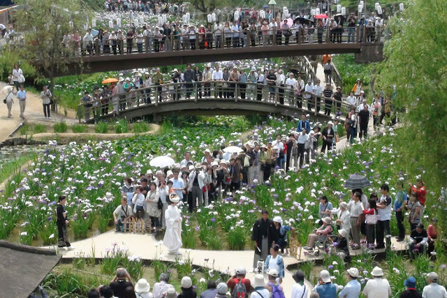 Iris Festival at Suigo Itako Park, Ibaraki Pref.