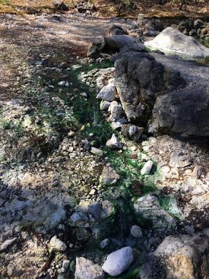 西の河原公園 緑色がこびりついた河原