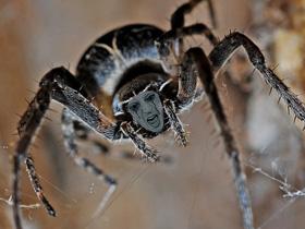 蜘蛛男(素材使用)