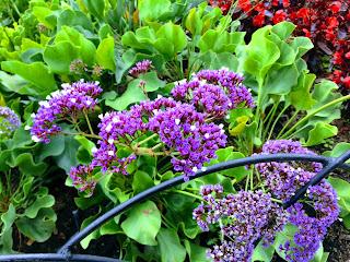 Color púrpura-morado-violeta o malva según el feng shui