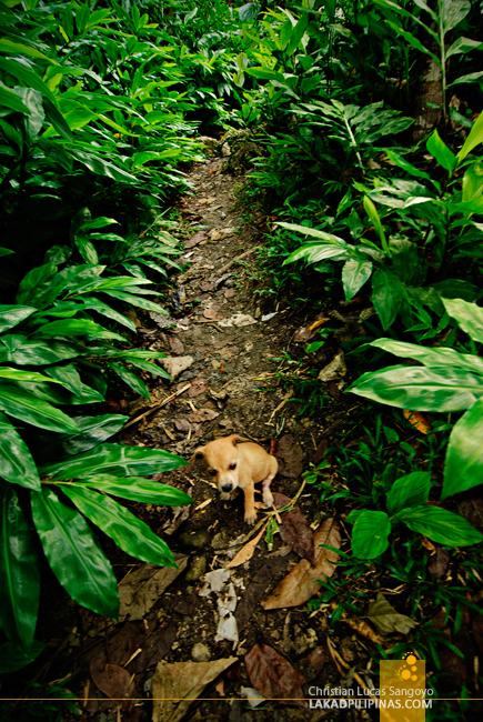 Cambugahay Falls Siquijor Dog Puppy