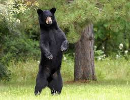 Ramapo Mountain State Forest Reopens After Bear Incidents -- Morris County Residents Cautioned Not to Feed Bears