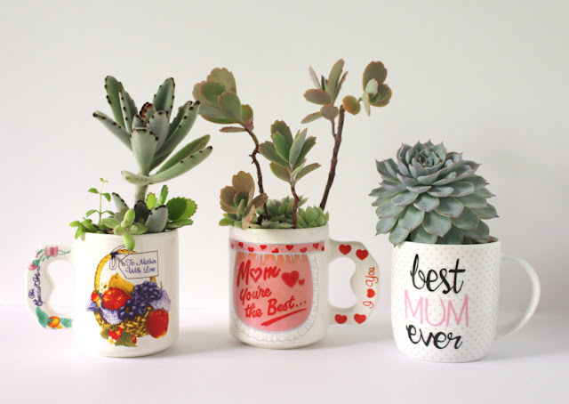 Diy gift succulents in Mother Day Mugs