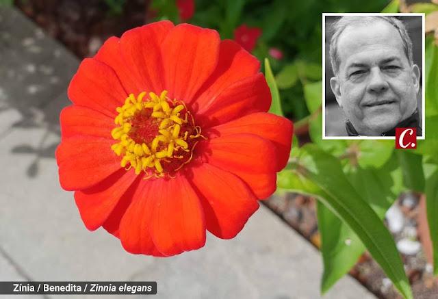 ambiente de leitura carlos romero germano romero flores silvestres flor do campo poesia mensagem das flores