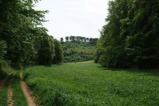 Grüner, gemütlicher Talkessel umgeben von Bäumen