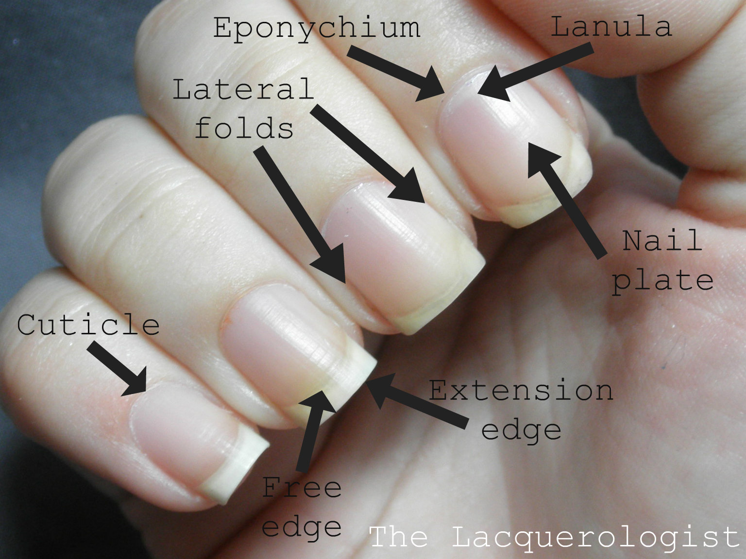 The Lacquerologist Tells All Eponychium And Nail Plate Health And