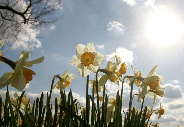 http://www.eska.pl/news/pogoda_wiosna_2017_-_kiedy_bedzie_cieplo_dlugoterminowa_prognoza_pogody/138187