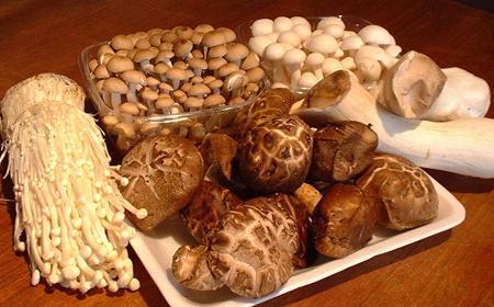 เห็ดทางการแพทย์ (Medicinal Mushrooms) @ www.readynutrition.com