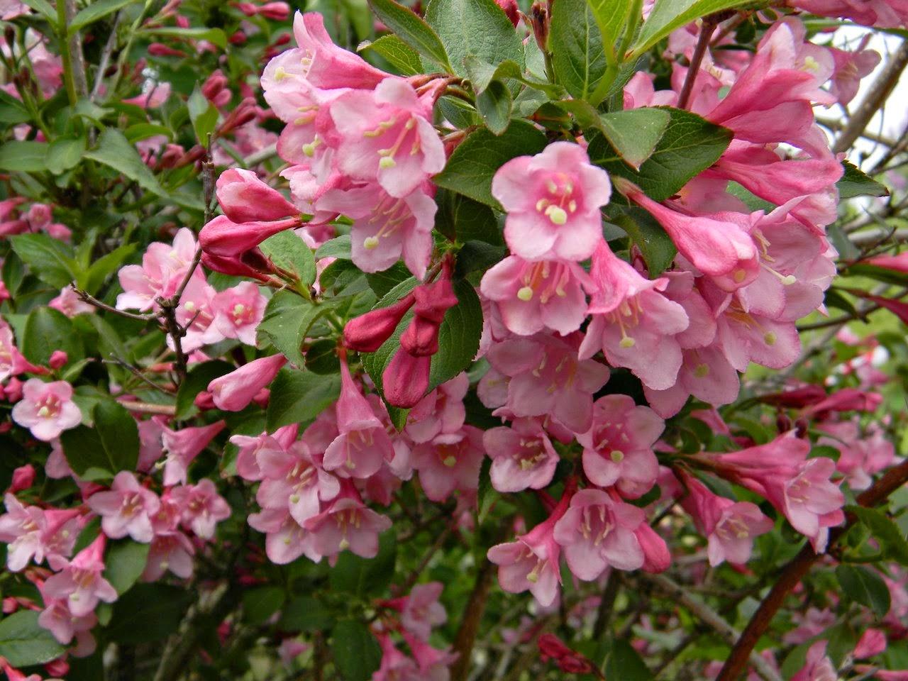 arboretum w Kórniku, ekspozycje kwiatowe