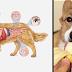 20 Comidas que SÍ le puedes dar a tu perro y 9 que NO deberías darle nunca