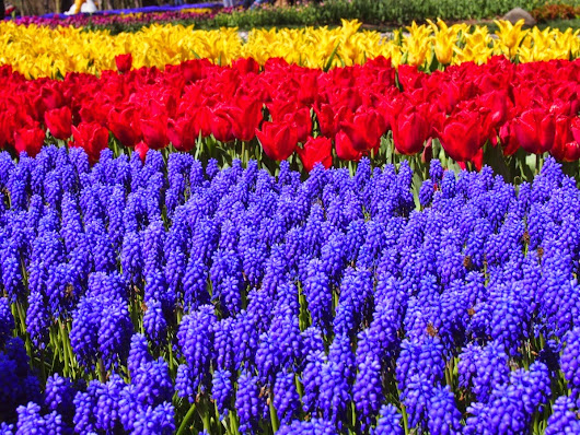 Special: Tulip Festival in Istanbul