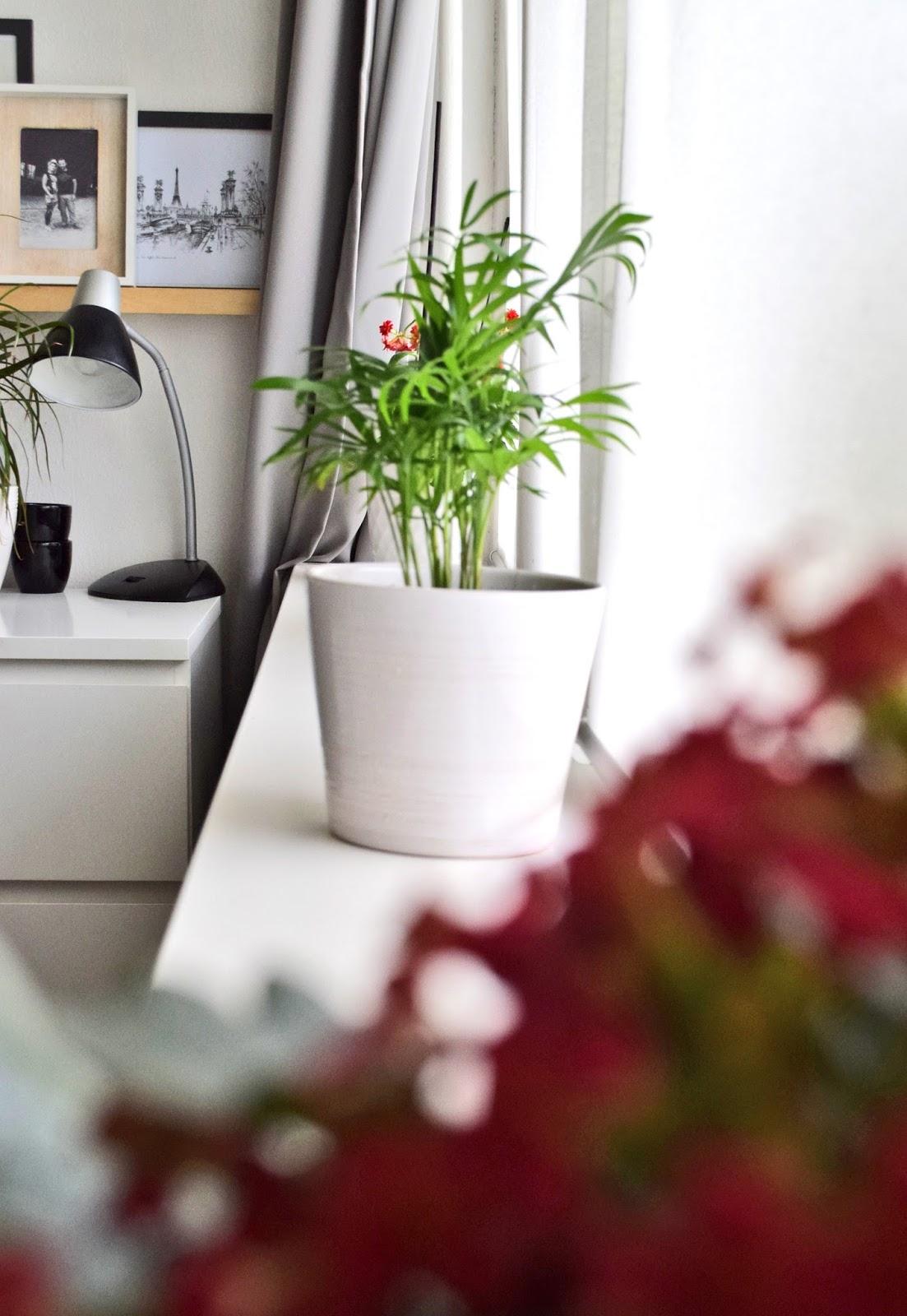 Rośliny w pokoju