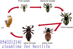شركة مكافحة حشرات,شركات مكافحة البق بجدة,القضاء على البق