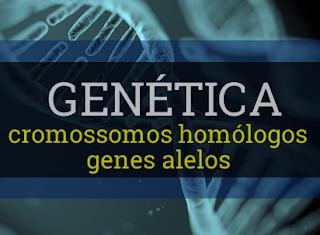 cromossomos homólogos genes alelos