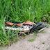 Motociclista morre em colisão com Fiat Toro na BR 324