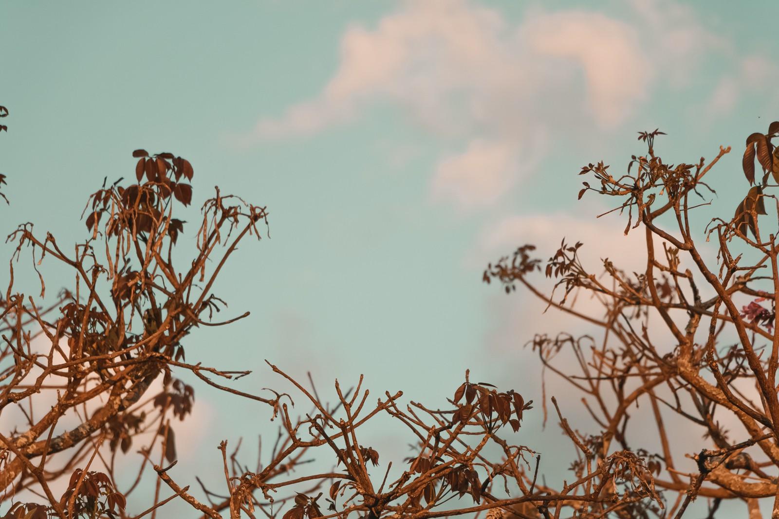 céu azul e galhos secos