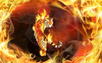 Wallpaper Harimau Api HD