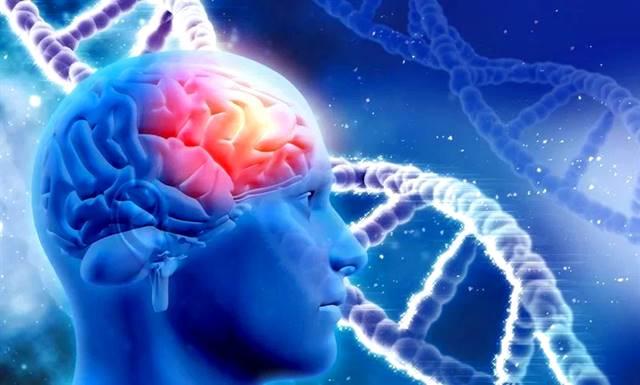 Regeneración celular en diferentes etapas de la vida