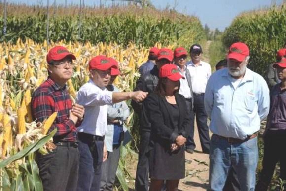 Mexicano que fue ignorado por el Gobierno de Peña Nieto y ahora hace maíz para China