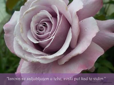 Ljubicasta ruza