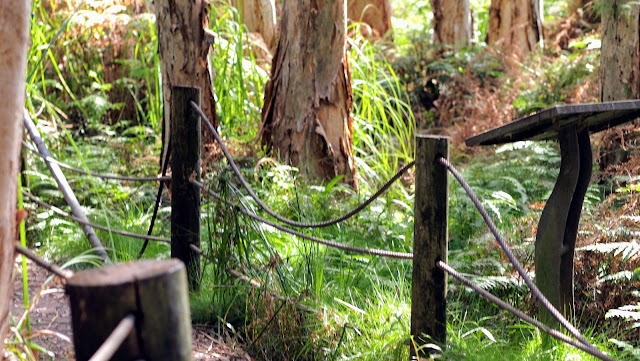 Broken fence and overgrown trail in Lachlan Swamp in Centennial Park Sydney