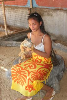 iguana pulau penyu