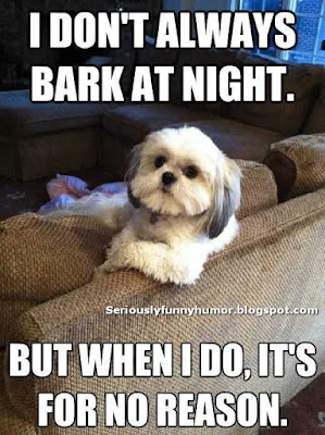 Dog: I don't always bark at night, but when I do, it's for no reason :D