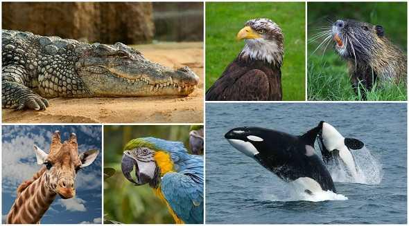 6-amazing-facts-about-animals-افضل-ستة-حقائق-مذهلة-عن-الحيوانات