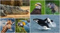 6 حقائق مذهلة عن الحيوانات