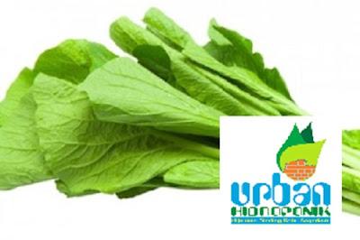 urban farming, urban hidroponik, jasa hidroponik