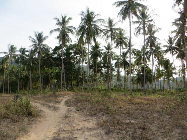 Поле пальм