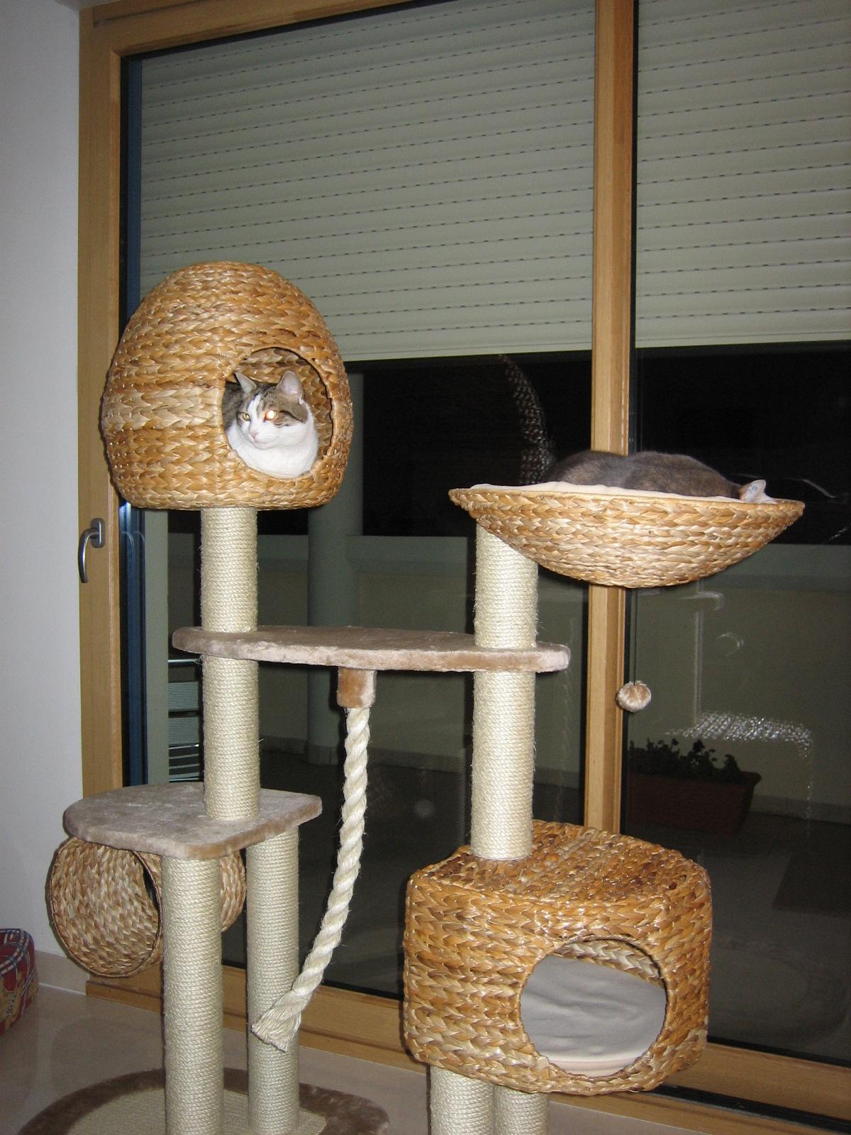 a43bcb1db749b4 Arbre à chat banana leaf - Trendyyy.com