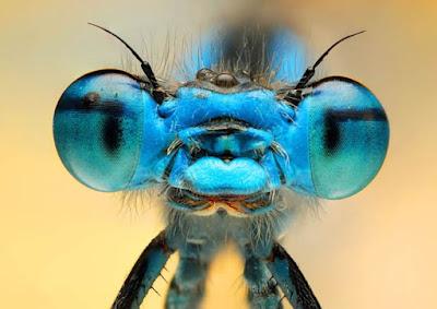 Lula diz que Moro foi picado pela mosca azul; ainda bem que não foi pela jararaca sem rabo